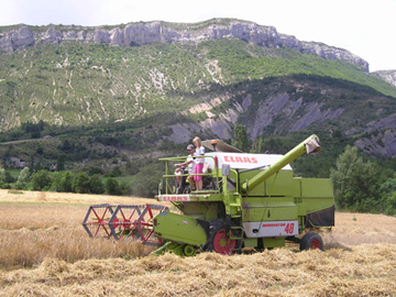 Harvesting a field of barley