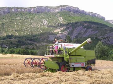 Harvesting a field ofbarley