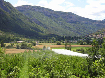 View of the orchard and village