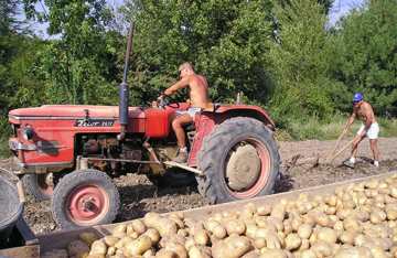 The old tractor andplough