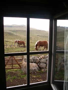 horses inL'Auvergne