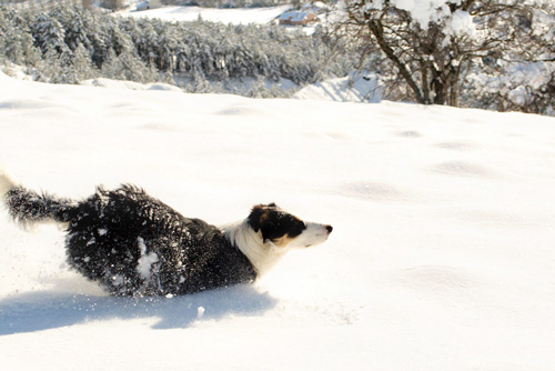 Dora, our border collie